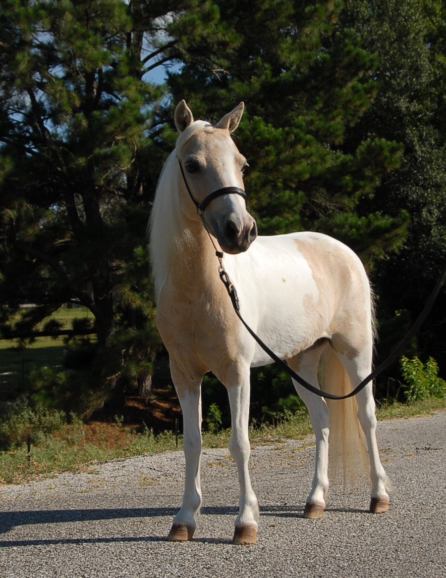 Watch - Show Miniature horse pictures video